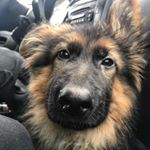 @dex_the_gsd_'s profile picture on influence.co