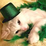 @kristi.carlson.775's profile picture