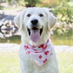 @oxleygoldendoodle's profile picture on influence.co
