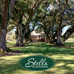 @stellaplantation's profile picture on influence.co