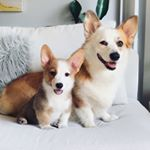 @mochthecorgi's profile picture on influence.co