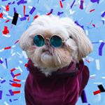@jeditheshihtzu's profile picture on influence.co