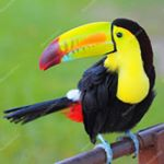 @costarica_welcome's profile picture on influence.co