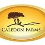 @caledonfarms's profile picture