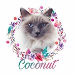 @coconuttheecat's profile picture