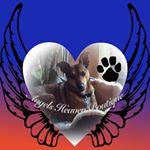 @angel.heaven438's profile picture