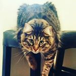 @shadow_cats_shenanigans's profile picture on influence.co