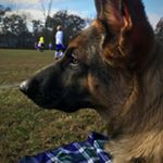 @cane.gsd's profile picture on influence.co