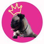 @iamlunapug's profile picture on influence.co