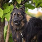 @koba.gsd's Profile Picture