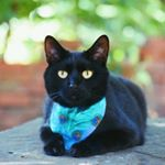 @mini_panther_pepper's profile picture on influence.co