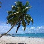 @praiasoficial's profile picture