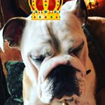 @bulldogversus's profile picture on influence.co