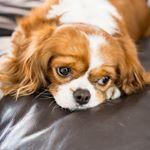 @molly.da.cavalier's profile picture on influence.co