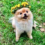 @mochi_mini's profile picture on influence.co