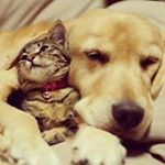 @pets_onlylove's profile picture on influence.co