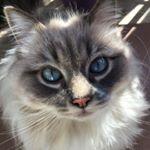 @siberian_gigi's profile picture on influence.co