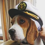 @adventures_of_billy_the_beagle's profile picture on influence.co