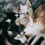 @huskycouture's profile picture on influence.co