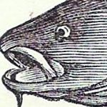@buyingseafood's profile picture on influence.co