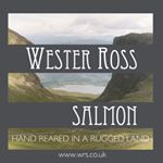 @westerrosssalmon's profile picture