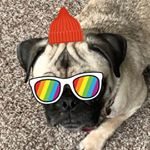 @truthpug's profile picture on influence.co