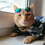 @vankliffroguecat's profile picture on influence.co