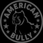 @americanbullyexclusive's profile picture on influence.co