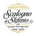 @terradorata's profile picture