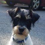 @bingo_beto's profile picture on influence.co