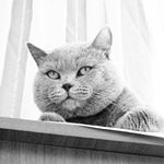 @ozgulgezgin's profile picture on influence.co