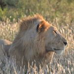 @nemm_tours_and_safaris's profile picture on influence.co