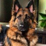@imzarathegsd's profile picture on influence.co