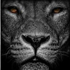 @lion.of_inst's profile picture on influence.co