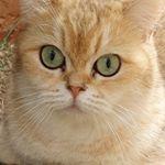 @smartcatsbrasil_janakudoeviana's profile picture on influence.co