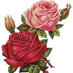 @rose_vershelvt's profile picture