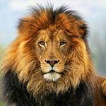 @supremefliper's profile picture on influence.co