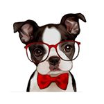 @jazzypuppy.dogs's profile picture on influence.co