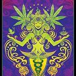 @divinefemininehemp's profile picture on influence.co