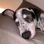 @oldmancodydog's profile picture on influence.co