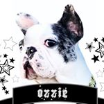 @ozzmanthefrenchie's profile picture on influence.co