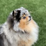 @mypompals's profile picture on influence.co
