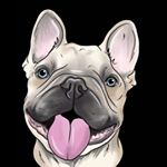 @wittenthefrenchbulldog's profile picture on influence.co