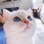 @baozithesilvercat's profile picture on influence.co
