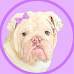 @bonnieandclydebulldogs's profile picture on influence.co