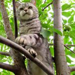 @persiancatloverz's profile picture on influence.co