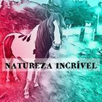 @sonhos.natureza's profile picture on influence.co