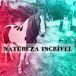 @sonhos.natureza's profile picture on influence.co