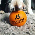 @sportspet's profile picture