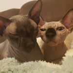 @the_wrinkly_duo's profile picture on influence.co